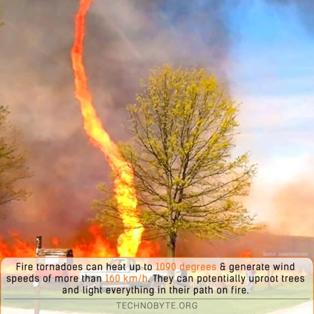 wtf fact Fire tornadoes are fiery daredevils