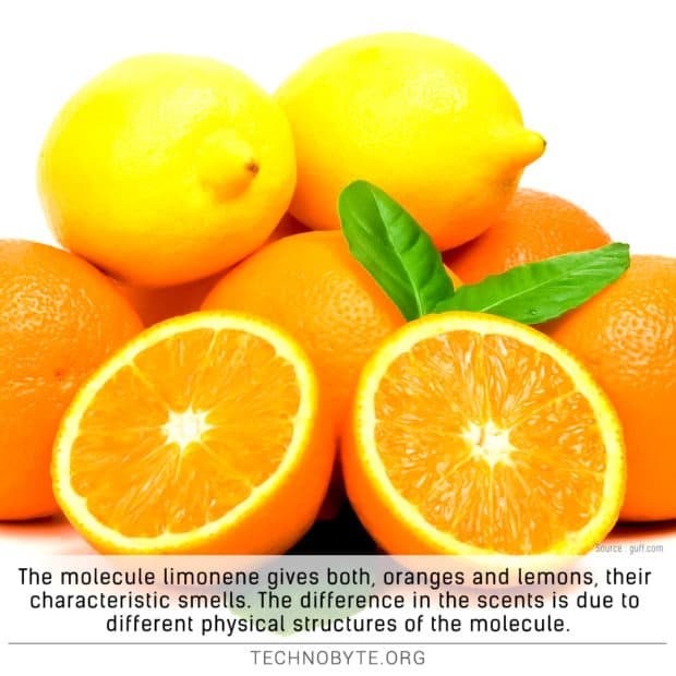 Oranges and lemons get their smell from the same molecule tb
