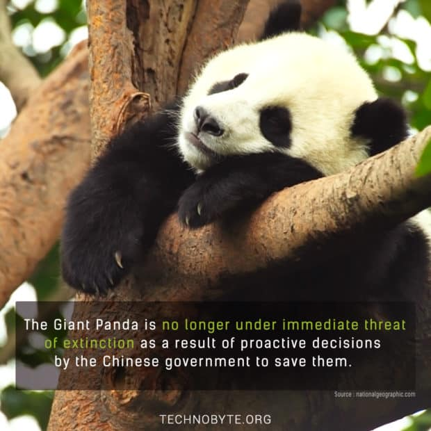 interesting facts that the pandas are now safe -no-longer-endangered-2016